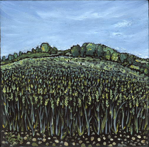 Wheat Fields 1